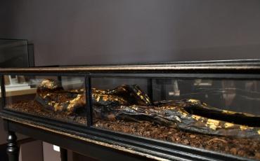 Visite accompagnée - La momie dorée d'Antinoé